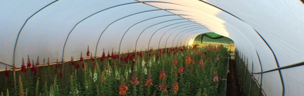 Rose & Flower Farm on 43 Acres for Sale ABM ID 6026